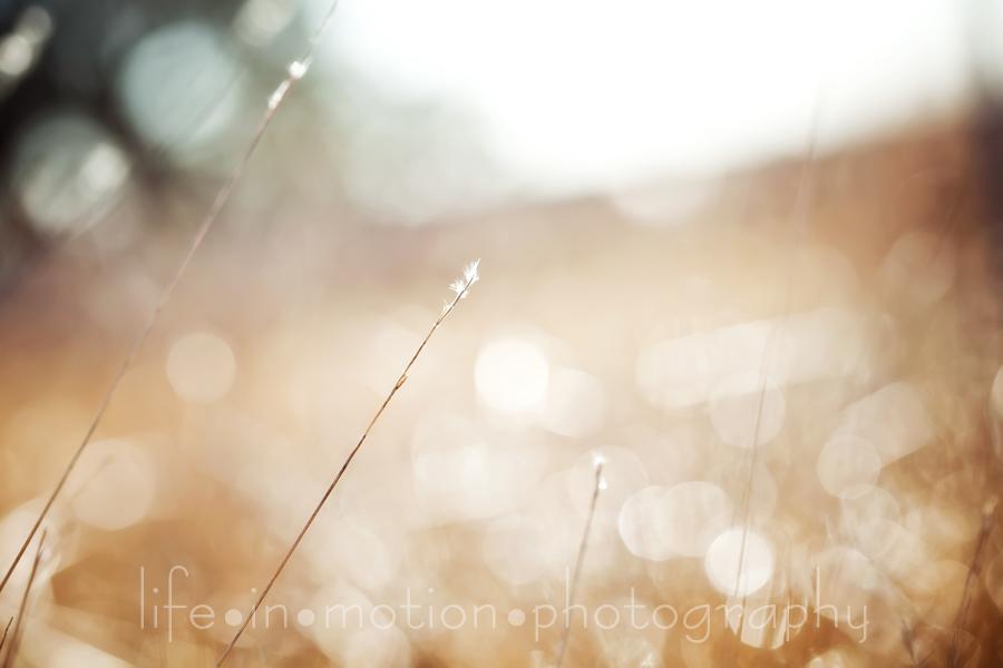grassweb