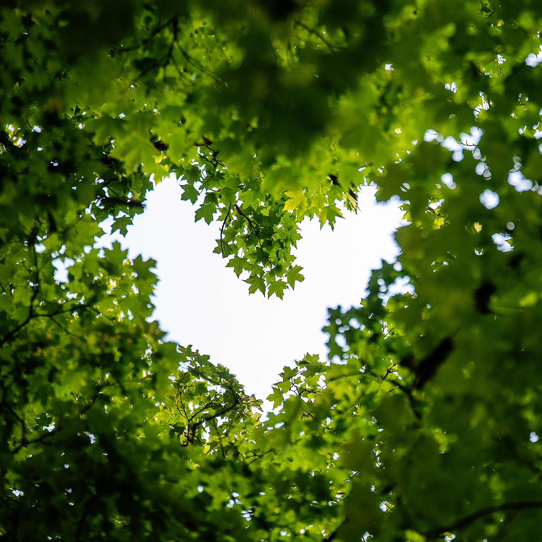 Tree Heart Photograph, DIY Wall Art, Photo Wall Decor