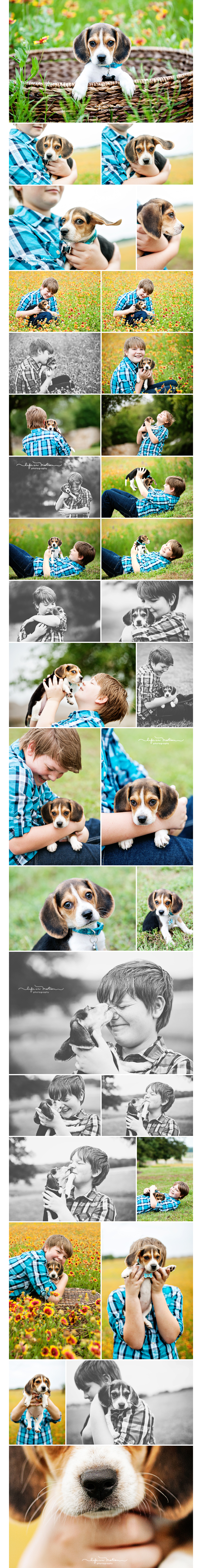 austin_pet_photographer