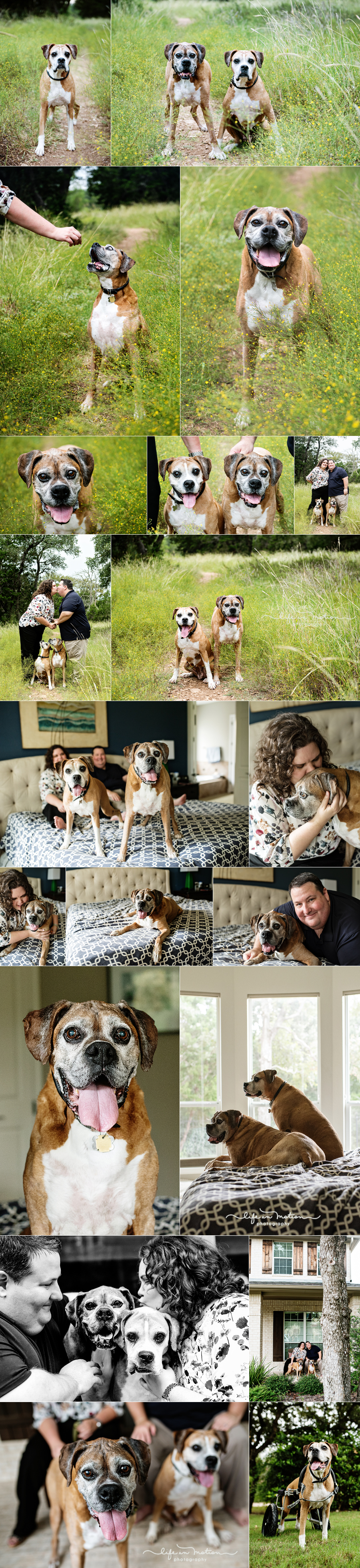 austin_pet_family_photography