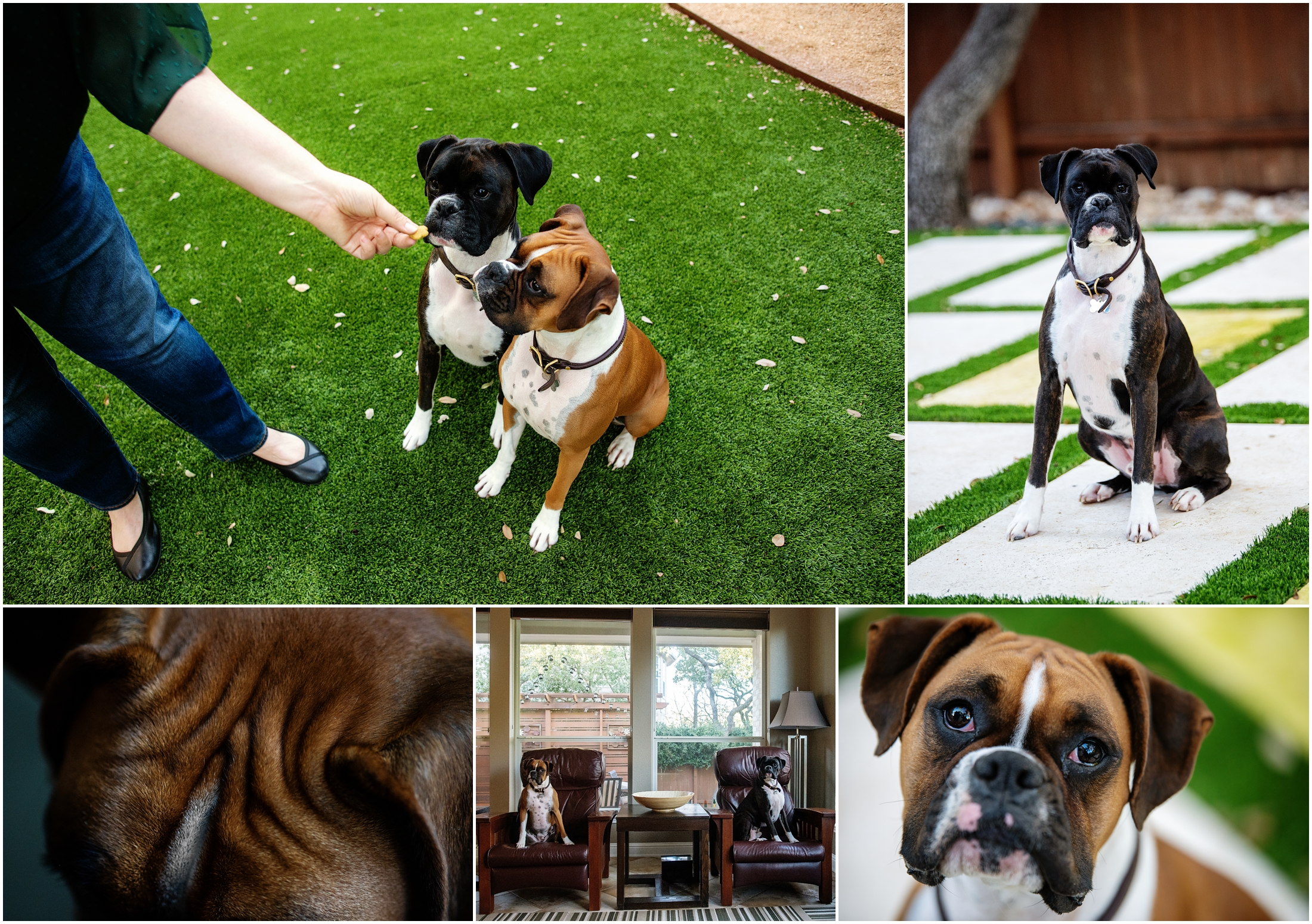 photo collage of boxer dogs