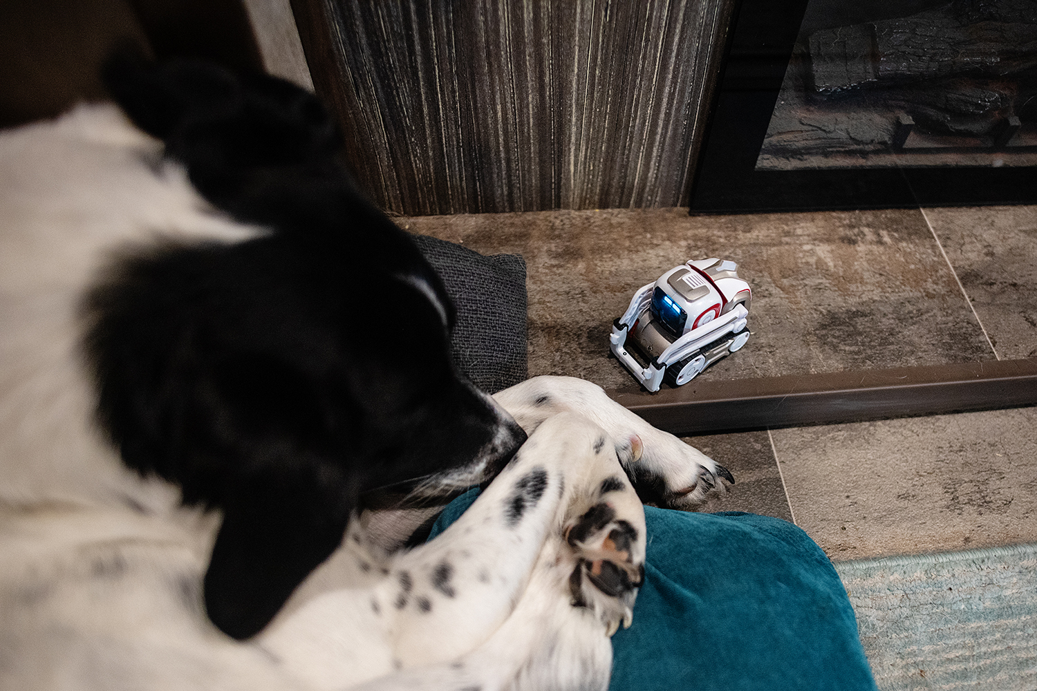 photo of dog with cosmo robot