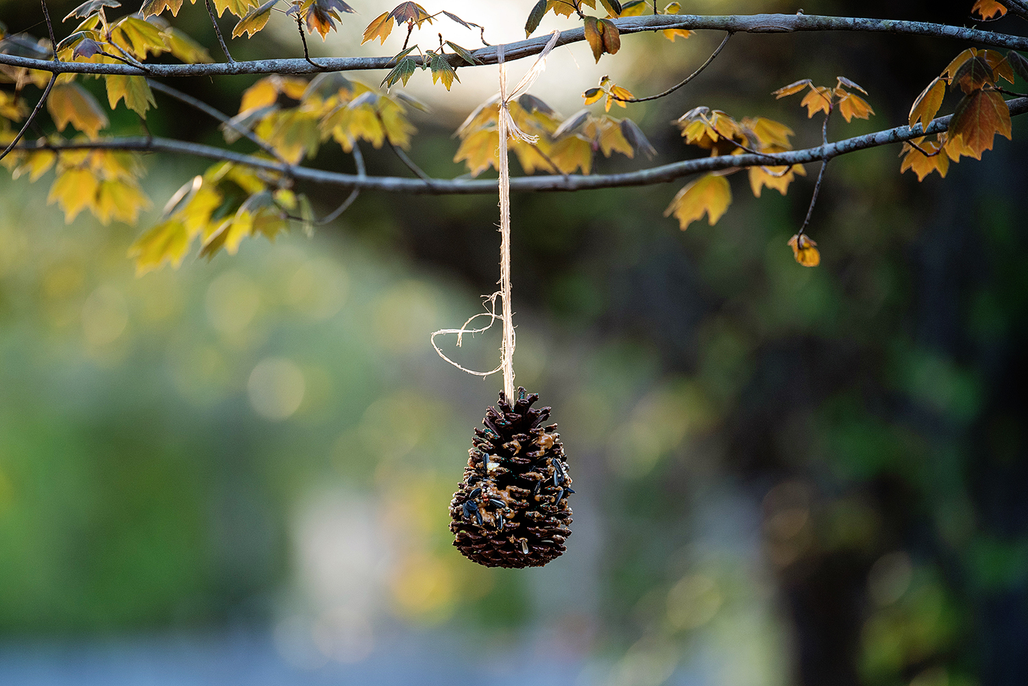 photo of pinecone bird feeder