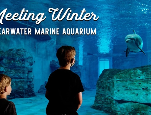 Meet Winter at the Clearwater Marine Aquarium